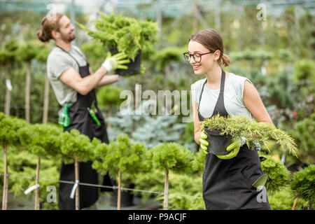 Working with plants in the greenhouse - Stock Photo