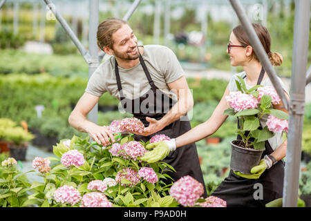Workers with flowers in the greenhouse - Stock Photo