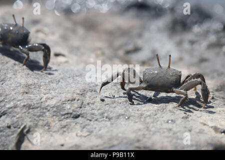 Qingdao, Qingdao, China. 17th July, 2018. Qingdao, CHINA-Numerous crabs gather at the beach in Qingdao, east China's Shandong Province. Credit: SIPA Asia/ZUMA Wire/Alamy Live News - Stock Photo