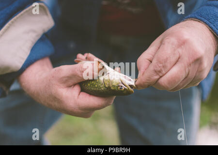 Removing A Hook From A Fish - Catch And Release - Stock Photo