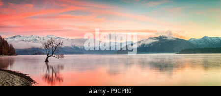 A cololourful sunrise on a frosty winter morning at Lake Wanaka, in the South Island of New Zealand, with the famous tree, said to be the most... - Stock Photo
