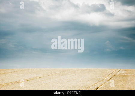 Ripe golden wheat field under a stormy sky, France, Europe - Stock Photo