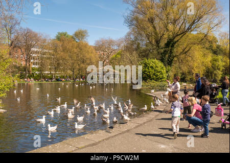 Families feeding the birds at the lake in St Stephen's Green urban park, Dublin, Ireland, Europe - Stock Photo