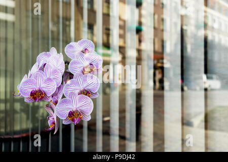 City reflected in the window with the flowers and the rhythm of vertical blinds outside the window. Riga - Stock Photo