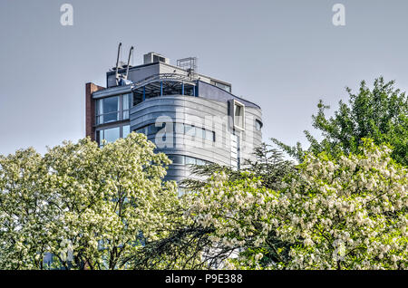 Rotterdam, The Netherlands, May 20, 2018: Blooming robinia pseudoacacia trees at Museumpark, with the Parkhotel in the background - Stock Photo