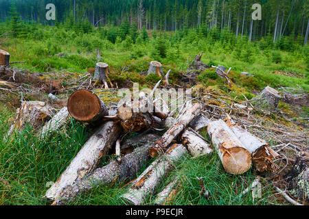 Dead and felled trees attacked by a bark beetle in a forest near the Plesne lake in the Sumava National Park (Bohemian Forest) - Stock Photo