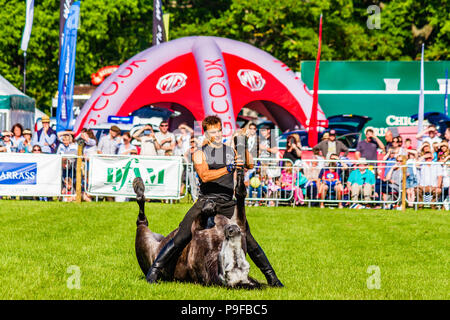 Stunt horseman from Atkinson Action Horses performing at Northumberland County Show 2018, UK. - Stock Photo