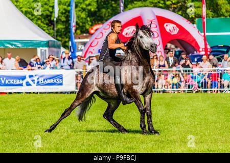 Stunt horseman from Atkinson Action Horses performing at Northumberland County Show 2018, UK. - Stock Photo