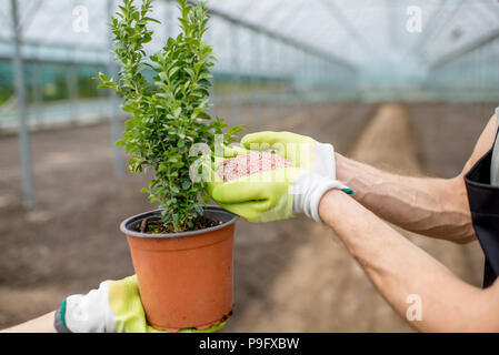 Farmer holding mineral fertilizers with green plant - Stock Photo