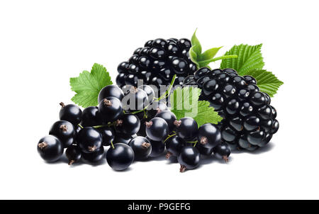 Blackberry and black currant isolated on white background as package design element - Stock Photo