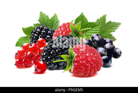 Black raspberry and red currant berries mix with leaves isolated on white background for tea package design - Stock Photo
