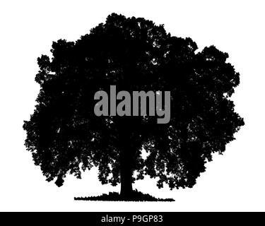 Black on white background silhouette of a large tree (bur oak, Quercus macrocarpa) - Stock Photo