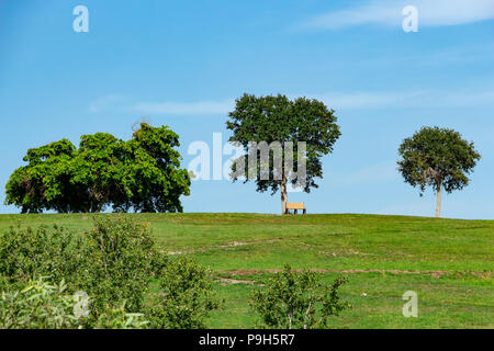 Single empty park bench under tree on green grass hill against blue sky - Vista View Park, Davie, Florida, USA - Stock Photo