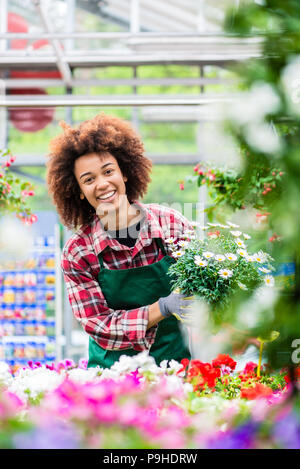 Florist smiling while holding a beautiful potted daisy flower plant for sale - Stock Photo