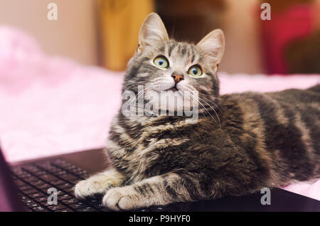 gray cat at notebook on a pink background - Stock Photo