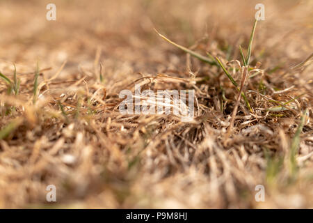 Poole, UK. 19th July 2018. The heatwave with very dry weather continues in the UK. Grass is turned brown with no rain. Credit: Thomas Faull/Alamy Live News - Stock Photo