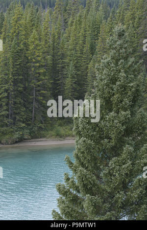 Beautiful blue water of Bow River glimpsed through dense evergreens in Alberta, Canada, along Bow Valley Parkway in the Canadian Rockies - Stock Photo