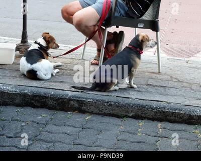 Two Terrier dog's wait for their master by sitting under the restaurant table looking at the world going by - Stock Photo