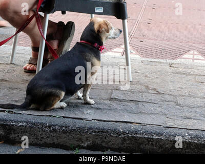 Terrier dog waits for his master by sitting under the restaurant table looking at the world going by - Stock Photo