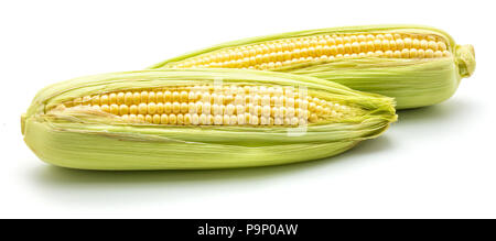 Two ears of fresh sweet corn isolated on white background - Stock Photo