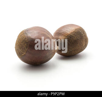 European chestnuts two Spanish edible isolated on white background raw fresh brown nuts - Stock Photo