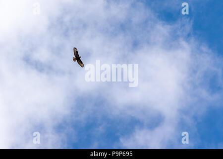 Single bird flying on cloudy blue sky - Stock Photo