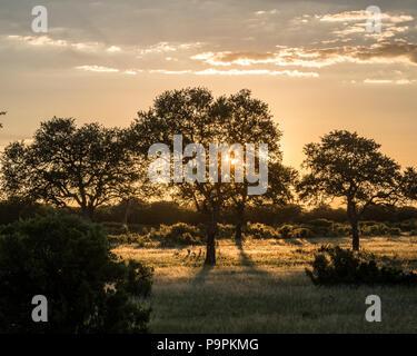 The sun sets over the grasslands in the Hwange National Park, Hwange, Zimbabwe - Stock Photo