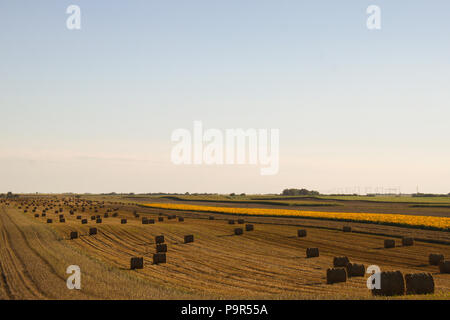 Hay rolls with clear blue sky on the field - Stock Photo