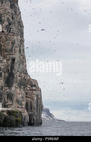 Crowded Arctic Bird Cliffs at Alkefjellet, Svalbard - Stock Photo