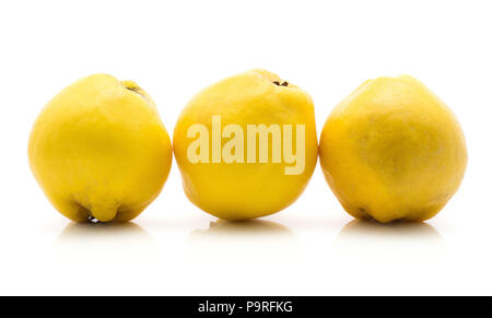 Three yellow quinces in row isolated on white background raw ripe - Stock Photo