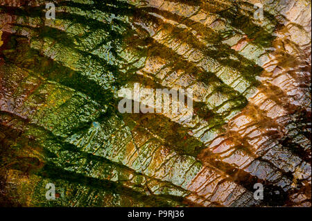 Wet colorful rock with algae at Sharktooth cove, north of Santa Cruz, California, USA.