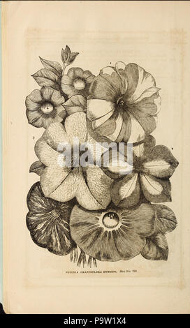 361 Curtis, Cobb and Washburn's amateur cultivator's guide to the flower and kitchen garden for 1878 (1878) (20819244465) - Stock Photo