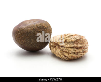 Two European chestnuts one Spanish edible peeled isolated on white background raw fresh brown nuts - Stock Photo