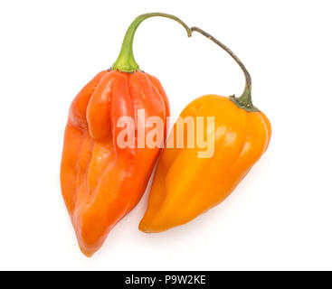 Two Habanero chili top view red orange hot peppers isolated on white background - Stock Photo