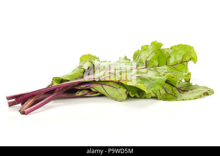 Beet greens bunch isolated on white background young fresh leaves - Stock Photo