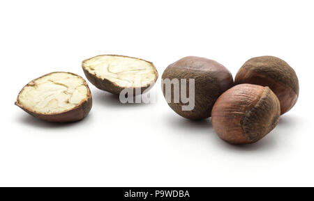 European chestnuts one cut in two halves isolated on white background Spanish edible raw fresh brown nuts with creamy flesh - Stock Photo