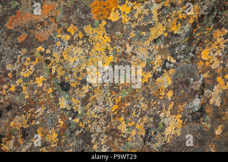 Moss on stone, colorful natural backgroung, Norway - Stock Photo