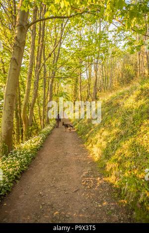 Woman Walking German Shepherd dog on South West Coast Path, Bossington, Exmoor - Stock Photo