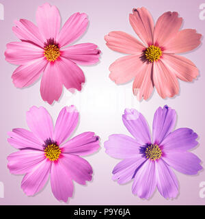 An image of four nice and beautiful flowers in front of a white and pink background - Stock Photo