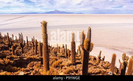 Incahuasi island in Uyuni salt flats - Stock Photo