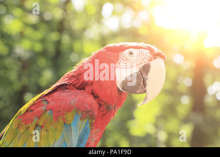 close up. macaw parrot on blurred background of the jungle - Stock Photo