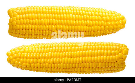 2 corn ears no leaves isolated on white background as package design element - Stock Photo