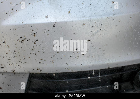 Insect remover being sprayed on car front, covered with bugs and flies. - Stock Photo