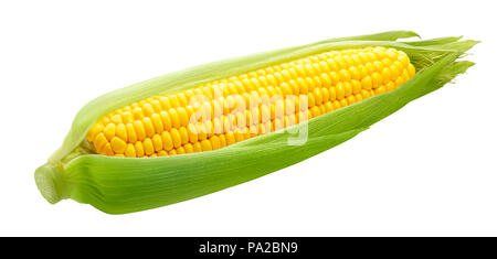 Fresh ear of corn isolated on white background as package design element - Stock Photo
