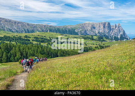 Flowering alp meadow with mountains in background and hikers on a path - Stock Photo
