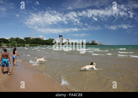 People and dogs enjoying themselves at Chicago's Montrose Avenue Dog Beach in the bright summer sun. - Stock Photo