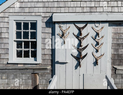 Rustic shack with fish tail dispay on door, Chatham, Cape Cod, Massachusetts, USA - Stock Photo