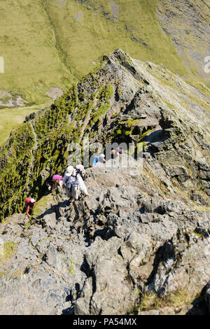 Hiking group of hikers rock scrambling up on Sharp Edge on Blencathra mountain in mountains of Lake District National Park. Keswick Cumbria England UK - Stock Photo