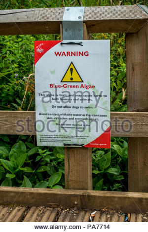 Fleet, Hampshire, UK. 21st July 2018. After weeks without significant rain, Fleet Pond, the largest natural lake in Hampshire, is suffering an outbreak of blue-green algae. People have been warned to avoid contact with the water and to ensure that their dogs do not swim in it. Images by Russell/Alamy Live News - Stock Photo