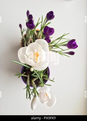 white and blue flower on white table - Stock Photo